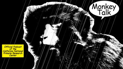 monkey-talk-podcast-sin-city