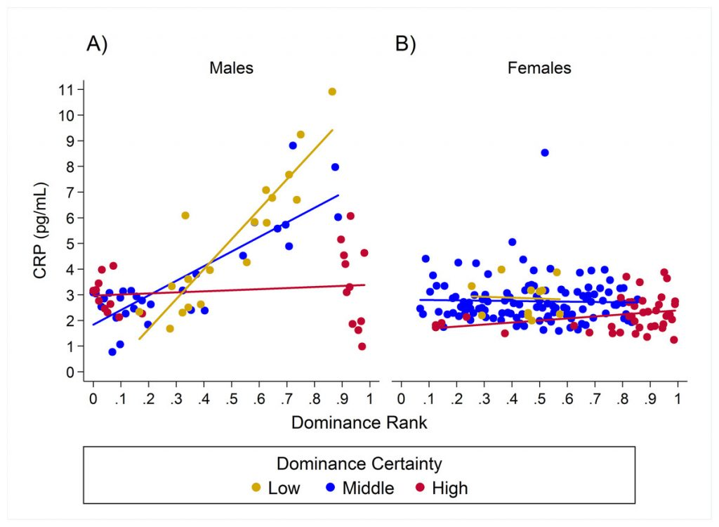 Figure Legend: This figure illustrates the effects of rank and dominance certainty on predicted CRP levels for males (A) and females (B).